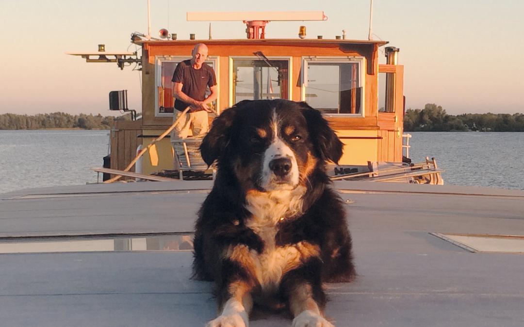 Scheepsjournaal: hond versus been