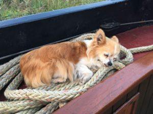 Waterman3 schip hond slapen