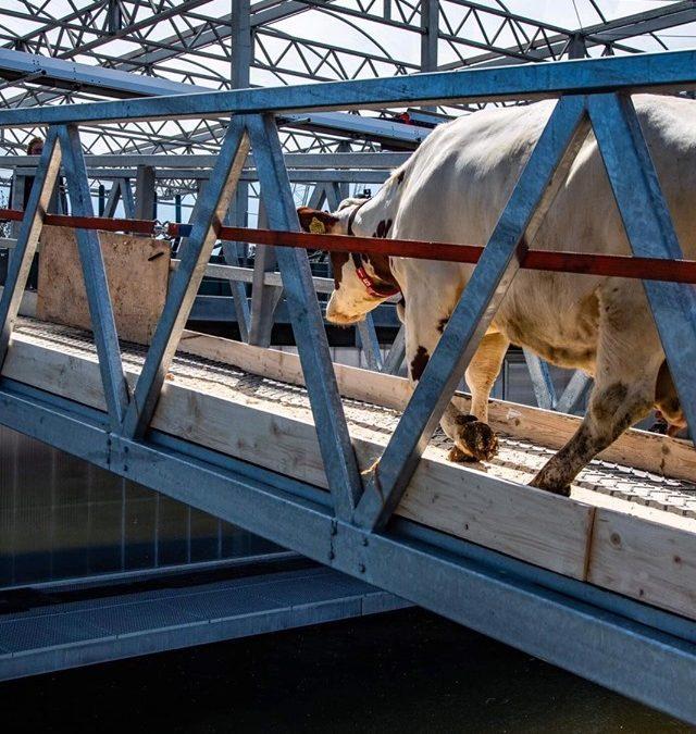 Drijvende zuivelboerderij in Rotterdam: lees het in ons themanummer